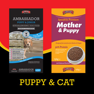 Puppy food and cat food